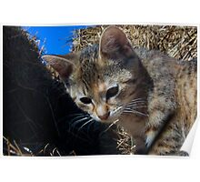 Hay Kitty Poster