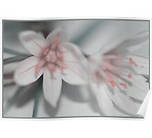 Flowers_9 Poster