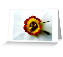 Heart of a Daffodil Greeting Card