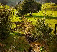 Rolling Oaks by Beatrix M Varga