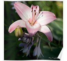 Daylilly Dreams Poster