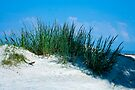 Sea Oats by Mary Campbell