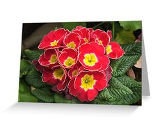 Edged with White Greeting Card
