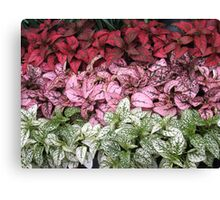 Laid In Line Canvas Print