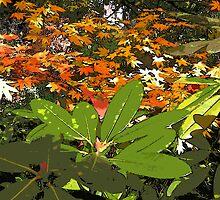 Autumn turning by Rob Watson