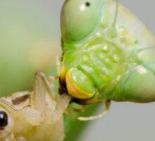 Hungry Mantis Sticker