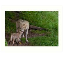 Arctic Wolf And Pup Art Print