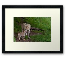 Arctic Wolf And Pup Framed Print