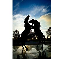 Stallions Rampant at Rymill Coonawarra Winery Photographic Print