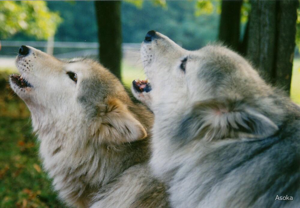 Wolfsong by Asoka