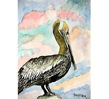 pelican bird 2 Photographic Print