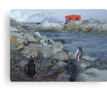 Port Circumcision, Antarctica Metal Print