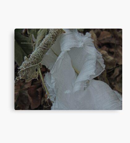 Ice Ribbon Hood Canvas Print