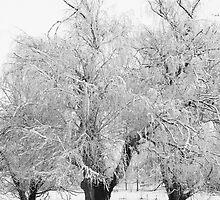 Three Trees B&W by Bo Insogna