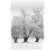 Three Trees B&W Poster