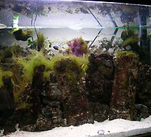 marine tank by tsums