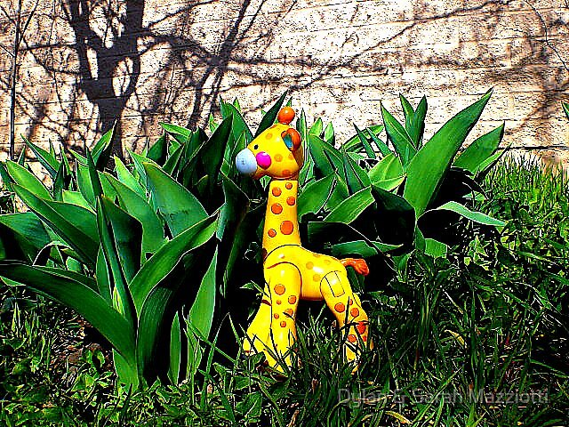 Front Yard Jungle 001 by Dylan & Sarah Mazziotti