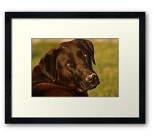 Black Lab - Labrador Retriever - Dog Photograph Framed Print
