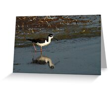 Black-Necked Stilt - Wetlands  Greeting Card