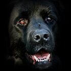 Newf in the Shadows by Debbie Bryant