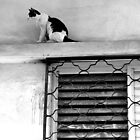 climbing cat by aska2