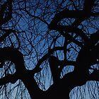 Willow at Dusk by Laura Kelk
