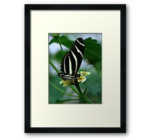 The Zebra Longwing Framed Print