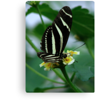 The Zebra Longwing Canvas Print