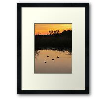 Coots on Econfina Framed Print