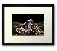 Alligator Snapper Turtle Framed Print