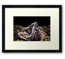 Alligator Snapper Turtle Framed Print