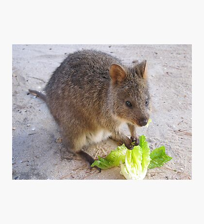 Breakfast time!   Rottnest Island 6 Photographic Print