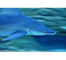 shark! Photographic Print