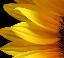 Simply Sunflower by Krys Bailey