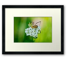 Insect on a white flower macro Framed Print