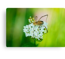 Insect on a white flower macro Canvas Print