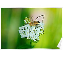 Insect on a white flower macro Poster