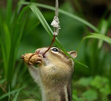 Chipmunk Fishing by Molly  Kinsey