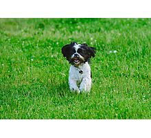 Running dog Photographic Print