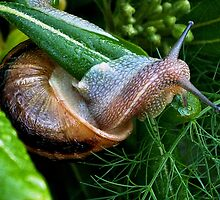 Snail in Morning Dew by Anthony Vella