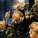 Christmas Carnations by Ms-Bexy