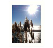 """Sunset thru the Reeds"" Art Print"