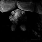 curous genghis - monochrome by foozma73