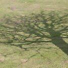 Tree shadow  by Nixter