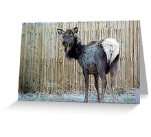 Can I HELP You??? Greeting Card