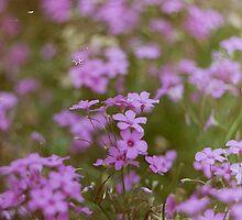 Film flowers by Kristina Bychkova