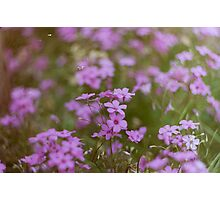 Film flowers Photographic Print