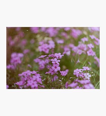 Film flowers Photographic Print