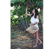 Young Teen girl in white dress picks grape in a vineyard  Photographic Print