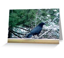 Scouting for Seeds Greeting Card